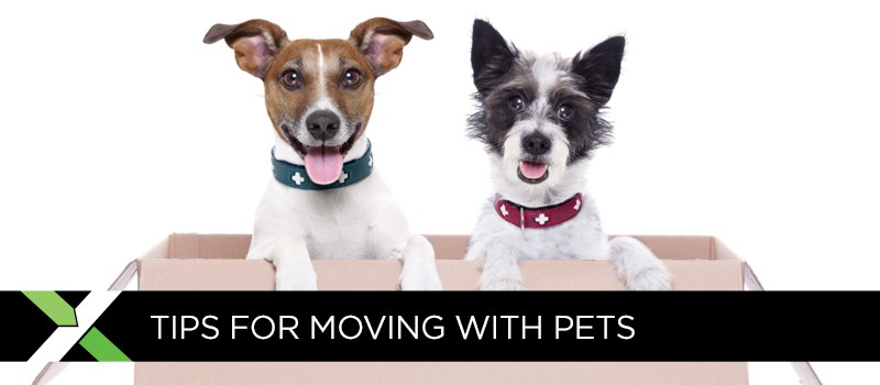 BlogImage_03MovingwithPets1